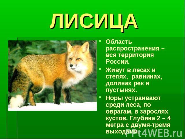 ЛИСИЦАОбласть распространения – вся территория России.Живут в лесах и степях, равнинах, долинах рек и пустынях.Норы устраивают среди леса, по оврагам, в зарослях кустов. Глубина 2 – 4 метра с двумя-тремя выходами.