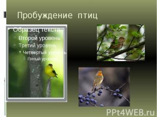 Пробуждение птиц