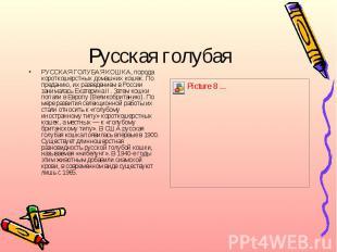 Русская голубаяРУССКАЯ ГОЛУБАЯ КОШКА, порода короткошерстных домашних кошек. По