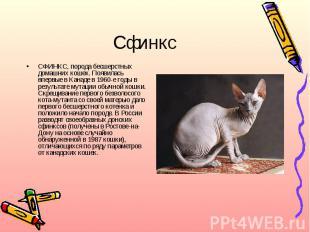 СфинксСФИНКС, порода бесшерстных домашних кошек. Появилась впервые в Канаде в 19