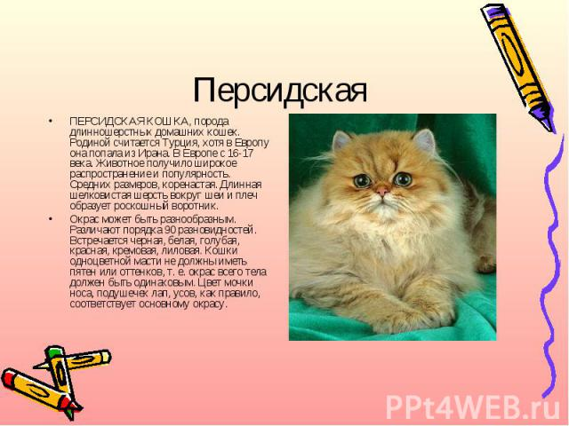 ПерсидскаяПЕРСИДСКАЯ КОШКА, порода длинношерстных домашних кошек. Родиной считается Турция, хотя в Европу она попала из Ирана. В Европе с 16-17 века. Животное получило широкое распространение и популярность. Средних размеров, коренастая. Длинная шел…
