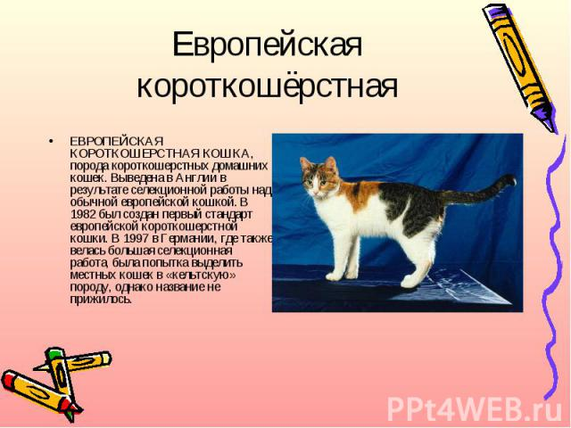 Европейская короткошёрстнаяЕВРОПЕЙСКАЯ КОРОТКОШЕРСТНАЯ КОШКА, порода короткошерстных домашних кошек. Выведена в Англии в результате селекционной работы над обычной европейской кошкой. В 1982 был создан первый стандарт европейской короткошерстной кош…
