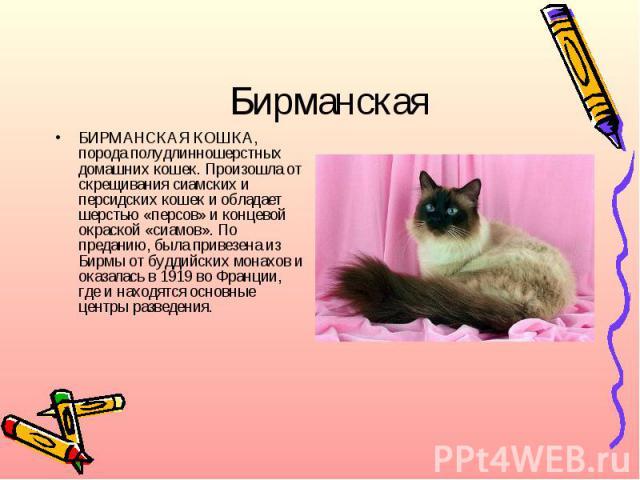 БирманскаяБИРМАНСКАЯ КОШКА, порода полудлинношерстных домашних кошек. Произошла от скрещивания сиамских и персидских кошек и обладает шерстью «персов» и концевой окраской «сиамов». По преданию, была привезена из Бирмы от буддийских монахов и оказала…