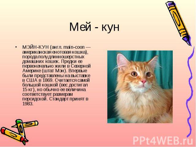 Мей - кунМЭЙН-КУН (англ. main-coon — американская енотовая кошка), порода полудлинношерстных домашних кошек. Предки ее первоначально жили в Северной Америке (штат Мэн). Впервые были представлены на выставке в США в 1869. Считается самой большой кошк…