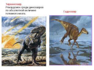 Тираннозавр. Рекордсмен среди динозавровпо абсолютной величине головного мозга.