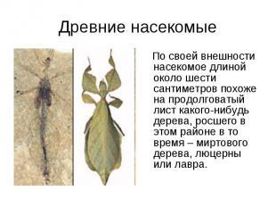 Древние насекомые По своей внешности насекомое длиной около шести сантиметров по