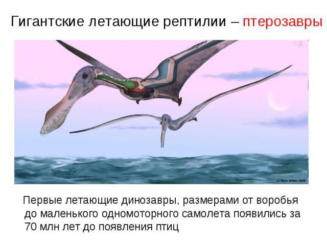 Гигантские летающие рептилии – птерозавры Первые летающие динозавры, размерами от воробья до маленького одномоторного самолета появились за 70 млн лет до появления птиц