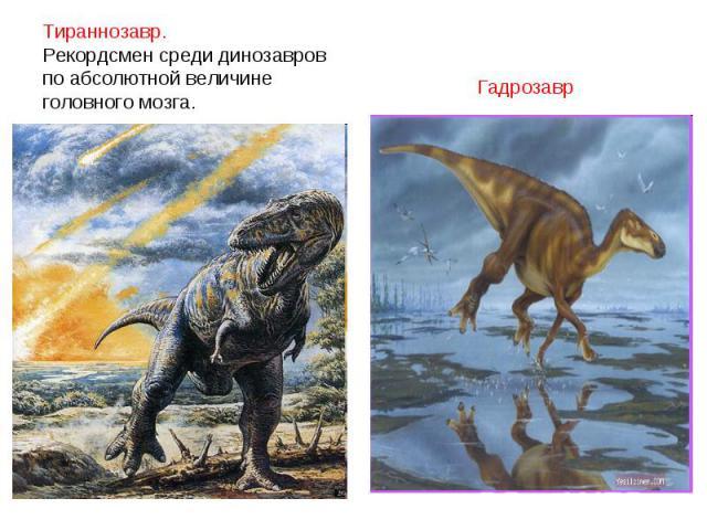 Тираннозавр. Рекордсмен среди динозавровпо абсолютной величине головного мозга. Гадрозавр