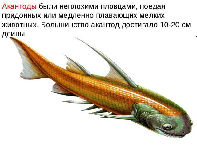 Акантоды были неплохими пловцами, поедая придонных или медленно плавающих мелких животных. Большинство акантод достигало 10-20 см длины.