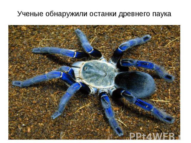 Ученые обнаружили останки древнего паука
