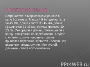 Усатая ночница Встречается в Марксовском районе в селе Золотовка. Масса 4,5-9 г,