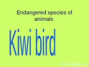 Endangered species of animals Kiwi bird