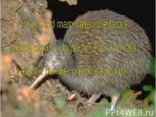 Introduced mammalian predators, namely stoats , dogs , ferrets , and cats , are
