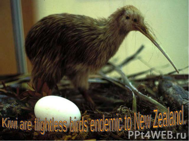 Kiwiareflightless birdsendemic toNew Zealand.