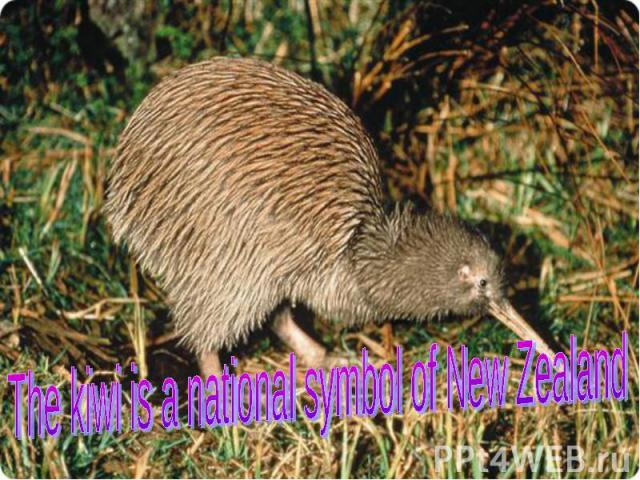 The kiwi is a national symbol of New Zealand