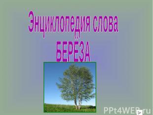 Энциклопедия слова БЕРЁЗА