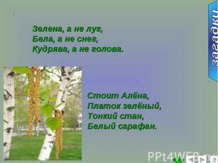 Зелена, а не луг,Бела, а не снег,Кудрява, а не голова.Стоит Алёна,Платок зелёный
