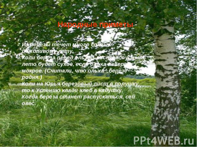 Народные приметыИз березы течет много сока - к дождливому лету.Коли береза перед ольхой лист распустит, лето будет сухое, если ольха наперед - мокрое. (Считали, что ольха - березе родня.)Коли на Юрья березовый лист в полушку, то к Успению клади хлеб…