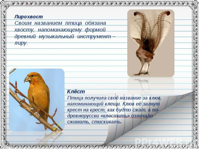 ЛирохвостСвоим названием птица обязана хвосту, напоминающему формой древний музыкальный инструмент – лиру.КлёстПтица получила своё название за клюв, напоминающий клещи. Клюв её загнут крест на крест, как будто сжат, а по- древнерусски «клестить» озн…