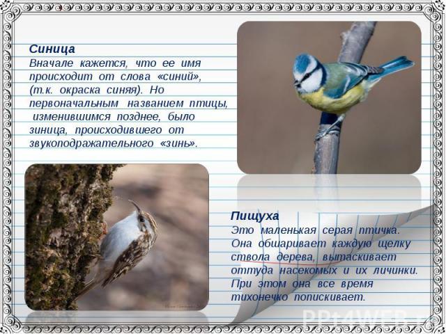 СиницаВначале кажется, что ее имя происходит от слова «синий», (т.к. окраска синяя). Но первоначальным названием птицы, изменившимся позднее, было зиница, происходившего от звукоподражательного «зинь».ПищухаЭто маленькая серая птичка. Она обшаривает…