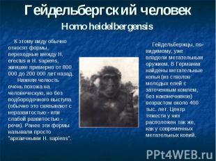 Гейдельбергский человекHomo heidelbergensis К этому виду обычно относят формы, п