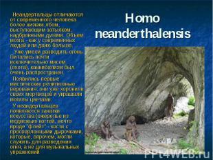 Нomo neanderthalensis Неандертальцы отличаются от современного человека более ни