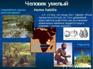 Человек умелыйОлдувайское ущелье, раскопки Дюбуа 2.4 - 1.5 млн. лет назад, Вост.