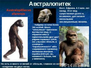 АвстралопитекAustralopithecus afarensis Вост. Африка, 4-3 млн. лет назад. Этот в