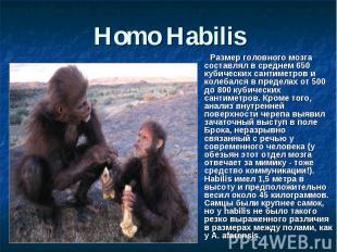 Homo Habilis Размер головного мозга составлял в среднем 650 кубических сантиметр