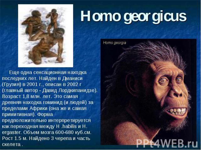 Homo georgicus Еще одна сенсационная находка последних лет. Найден в Дманиси (Грузия) в 2001 г., описан в 2002 г (главный автор - Давид Лордкипанидзе). Возраст 1,8 млн. лет. Это самая древняя находка гоминид (и людей) за пределами Африки (она же и с…