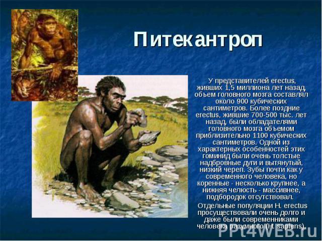 Питекантроп У представителей erectus, живших 1,5 миллиона лет назад, объем головного мозга составлял около 900 кубических сантиметров. Более поздние erectus, жившие 700-500 тыс. лет назад, были обладателями головного мозга объемом приблизительно 110…