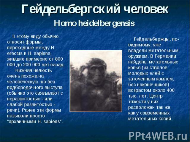 Гейдельбергский человекHomo heidelbergensis К этому виду обычно относят формы, переходные между H. erectus и H. sapiens, жившие примерно от 800 000 до 200 000 лет назад. Нижняя челюсть очень похожа на человеческую, но без подбородочного выступа (обы…