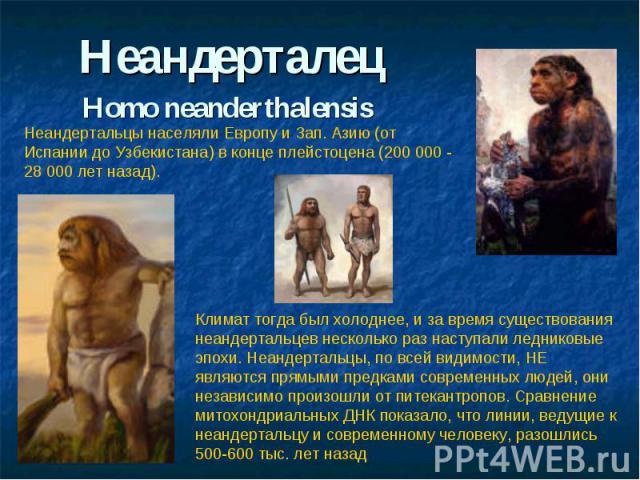НеандерталецНomo neanderthalensis Неандертальцы населяли Европу и Зап. Азию (от Испании до Узбекистана) в конце плейстоцена (200 000 - 28 000 лет назад). Климат тогда был холоднее, и за время существования неандертальцев несколько раз наступали ледн…