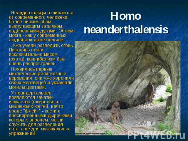 Нomo neanderthalensis Неандертальцы отличаются от современного человека более низким лбом, выступающим затылком, надбровными дугами. Объем мозга - как у современных людей или даже больше. Уже умели разводить огонь. Питались почти исключительно мясом…