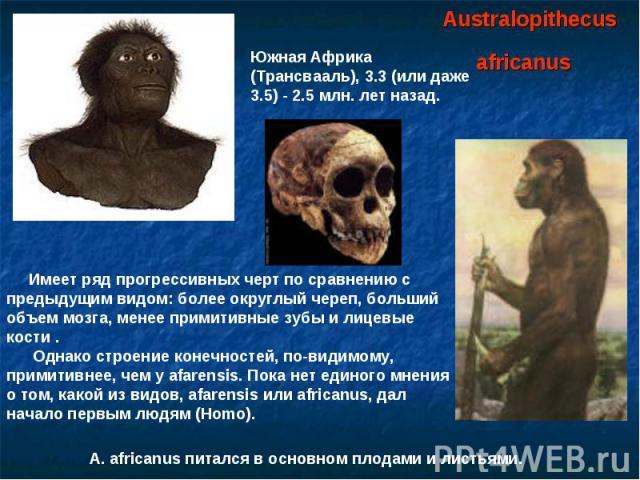 Australopithecus africanus Южная Африка (Трансвааль), 3.3 (или даже 3.5) - 2.5 млн. лет назад. Имеет ряд прогрессивных черт по сравнению с предыдущим видом: более округлый череп, больший объем мозга, менее примитивные зубы и лицевые кости . Однако с…