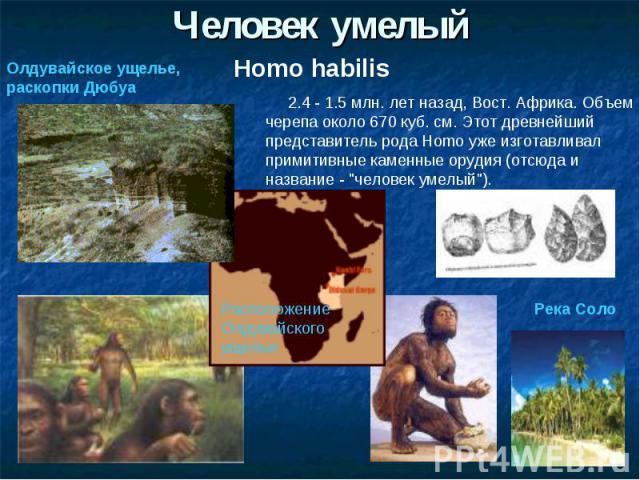 Человек умелыйОлдувайское ущелье, раскопки Дюбуа 2.4 - 1.5 млн. лет назад, Вост. Африка. Объем черепа около 670 куб. см. Этот древнейший представитель рода Homo уже изготавливал примитивные каменные орудия (отсюда и название -
