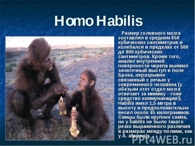 Homo Habilis Размер головного мозга составлял в среднем 650 кубических сантиметров и колебался в пределах от 500 до 800 кубических сантиметров. Кроме того, анализ внутренней поверхности черепа выявил зачаточный выступ в поле Брока, неразрывно связан…