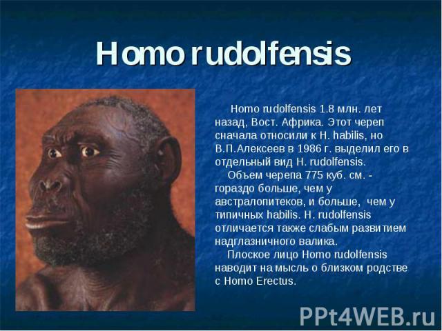 Homo rudolfensis Homo rudolfensis 1.8 млн. лет назад, Вост. Африка. Этот череп сначала относили к H. habilis, но В.П.Алексеев в 1986 г. выделил его в отдельный вид H. rudolfensis. Объем черепа 775 куб. см. - гораздо больше, чем у австралопитеков, и …
