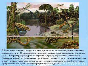 5. В это время появляются первые отряды крылатых насекомых – тараканы, длина тел