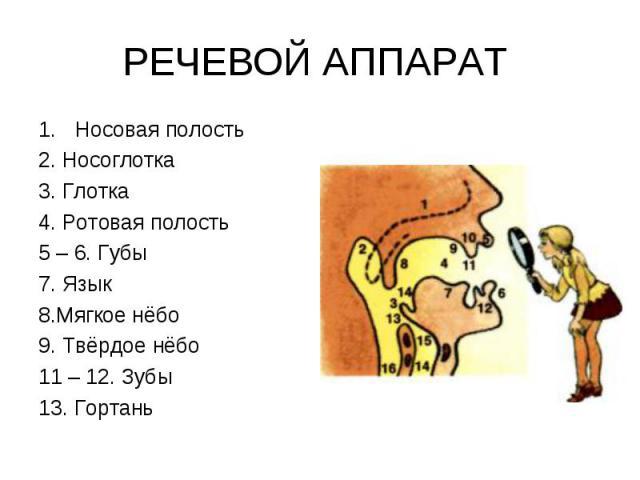 РЕЧЕВОЙ АППАРАТ Носовая полость2. Носоглотка3. Глотка4. Ротовая полость5 – 6. Губы7. Язык8.Мягкое нёбо9. Твёрдое нёбо11 – 12. Зубы13. Гортань