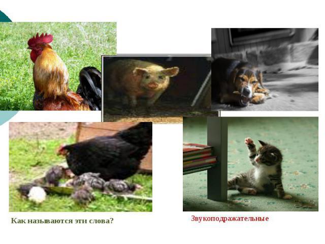 Запишите буквами звуки, которые издают изображённые на фотографиях животные.Как называются эти слова? Звукоподражательные