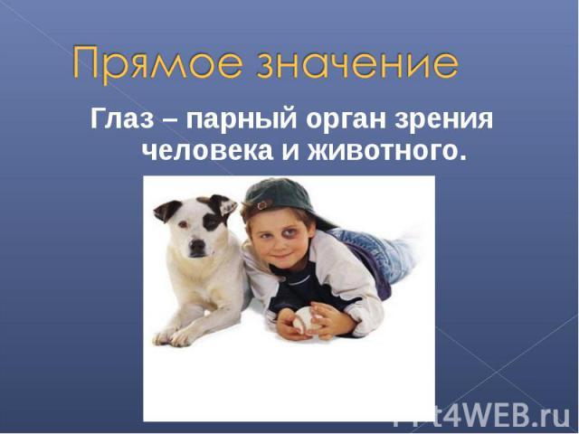 Прямое значениеГлаз – парный орган зрения человека и животного.