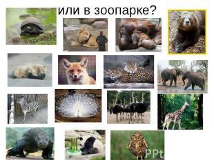 или в зоопарке?