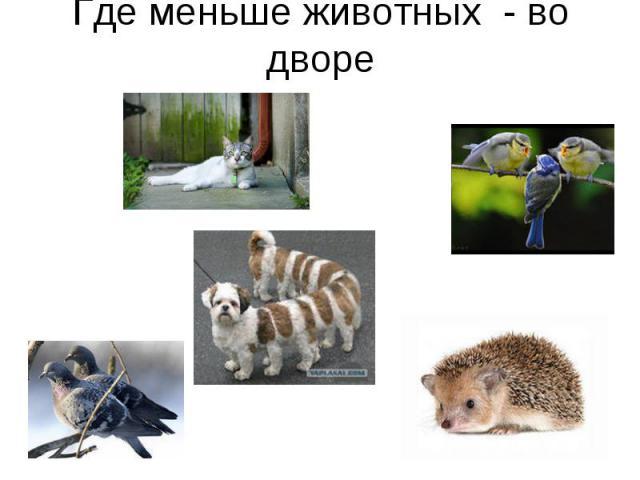 Где меньше животных - во дворе