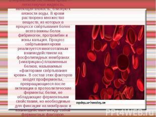 В нормальном состоянии кровь — легкотекучая жидкость, имеющая вязкость, близкую