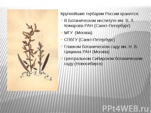 Крупнейшие гербарии России хранятся:В Ботаническом институте им. В. Л. Комарова
