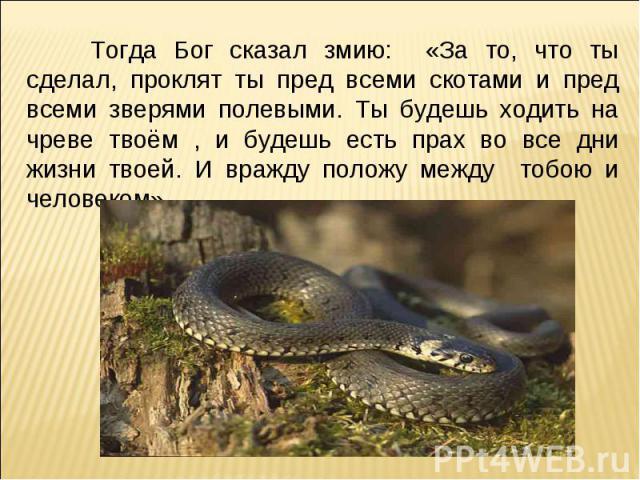 Тогда Бог сказал змию: «За то, что ты сделал, проклят ты пред всеми скотами и пред всеми зверями полевыми. Ты будешь ходить на чреве твоём , и будешь есть прах во все дни жизни твоей. И вражду положу между тобою и человеком»