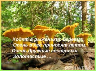 Ходят в рыженьких беретах,Осень в лес приносят летом.Очень дружные сестрички –