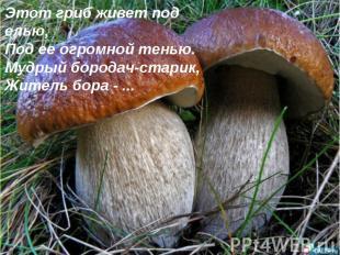 Этот гриб живет под елью, Под ее огромной тенью. Мудрый бородач-старик, Житель б