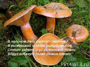 В хвойном лесу растет паренек,В рыженькой шляпке рыжий грибок.Стоит задеть и из